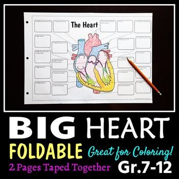Heart Structure Foldable - Big Foldable for Interactive ...