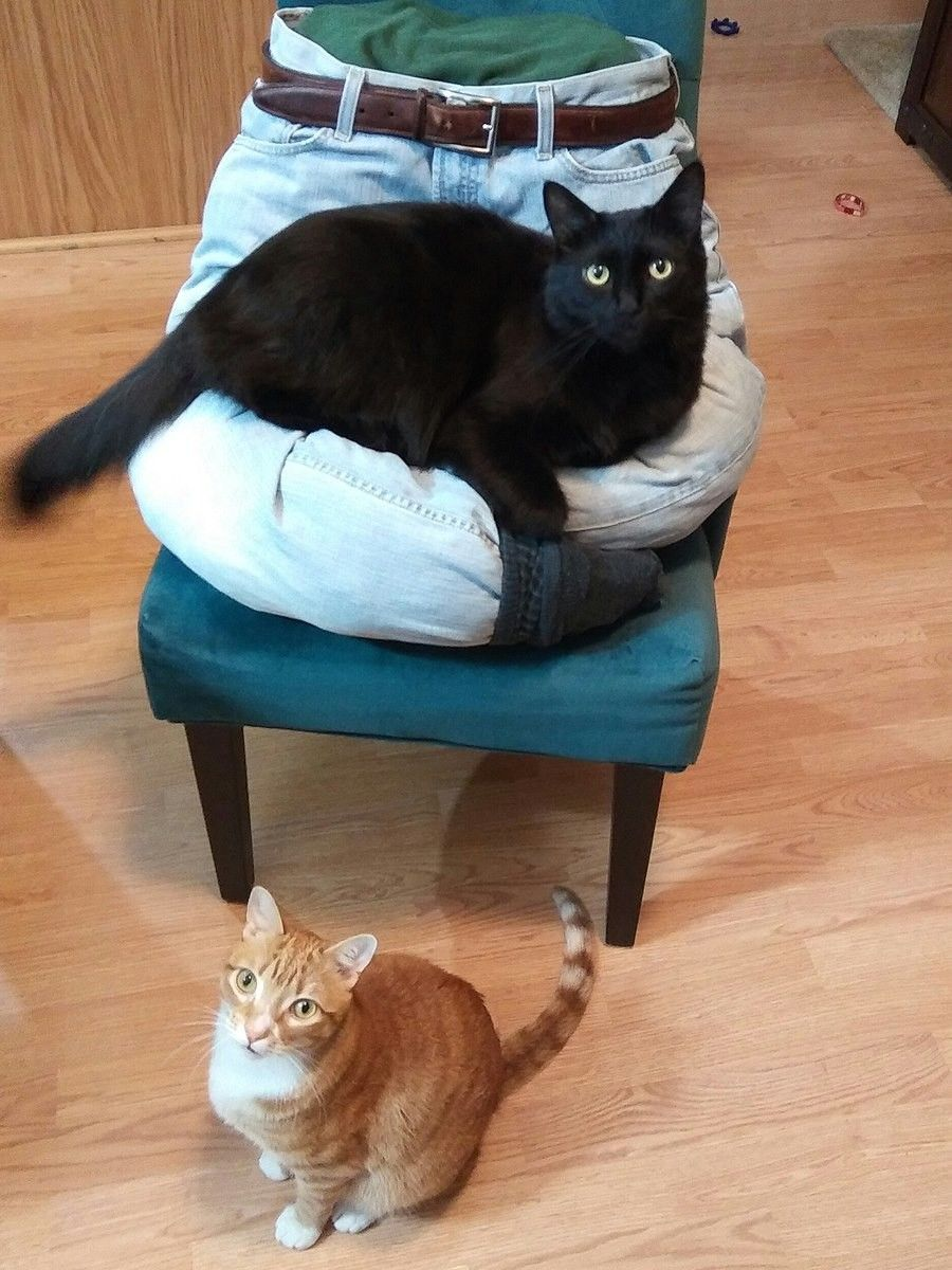 This Guy Came Up With Five Brilliant Affordable And Useful Ideas To Keep His Cats Happy Presenting The Lap Cat Bed Cou Cats Cats And Kittens Cat Bed