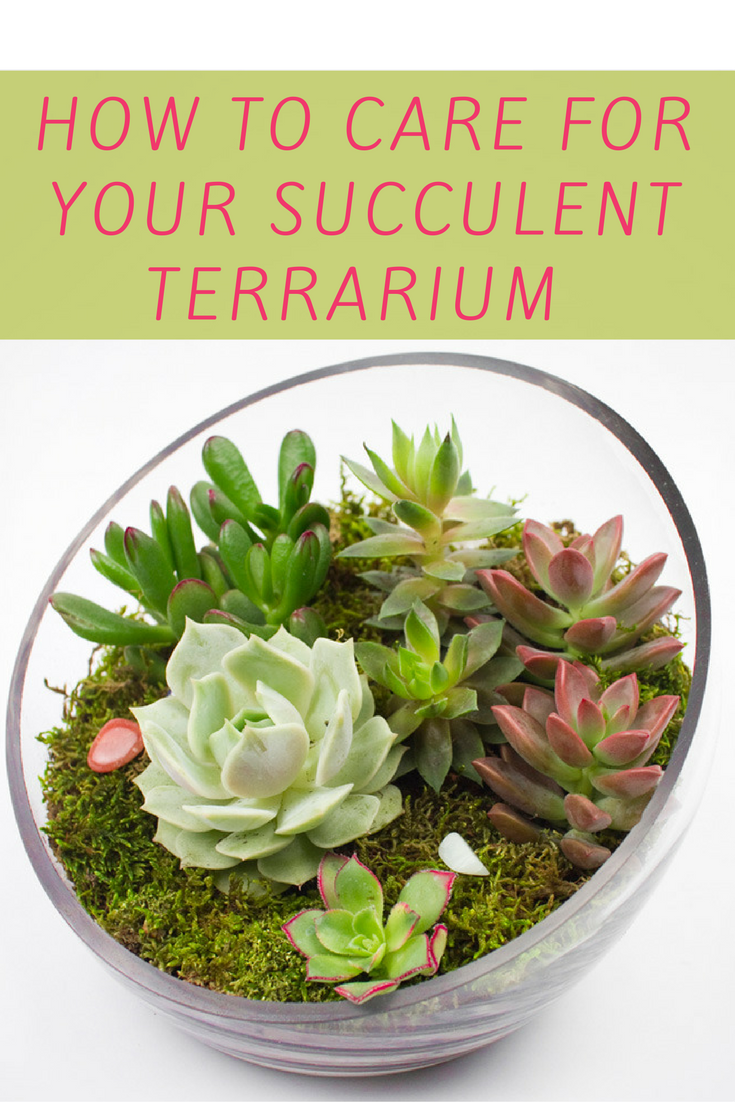 How To Care For Your Succulent Terrarium How To Tutorials