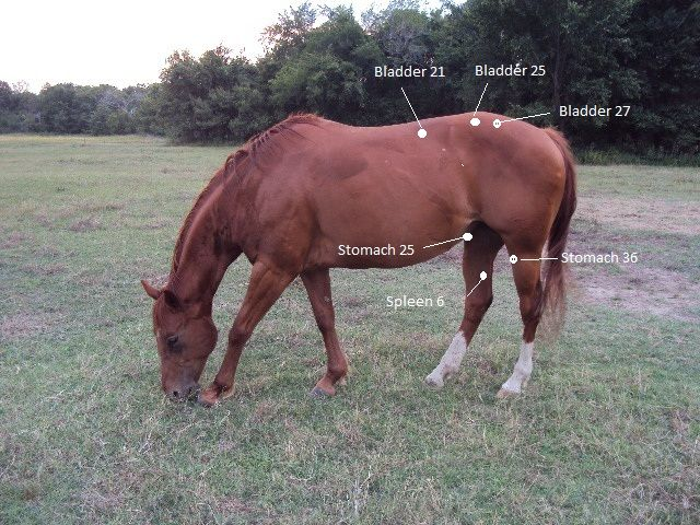 Acupressure For Colic In Horses Using Acupressure Can