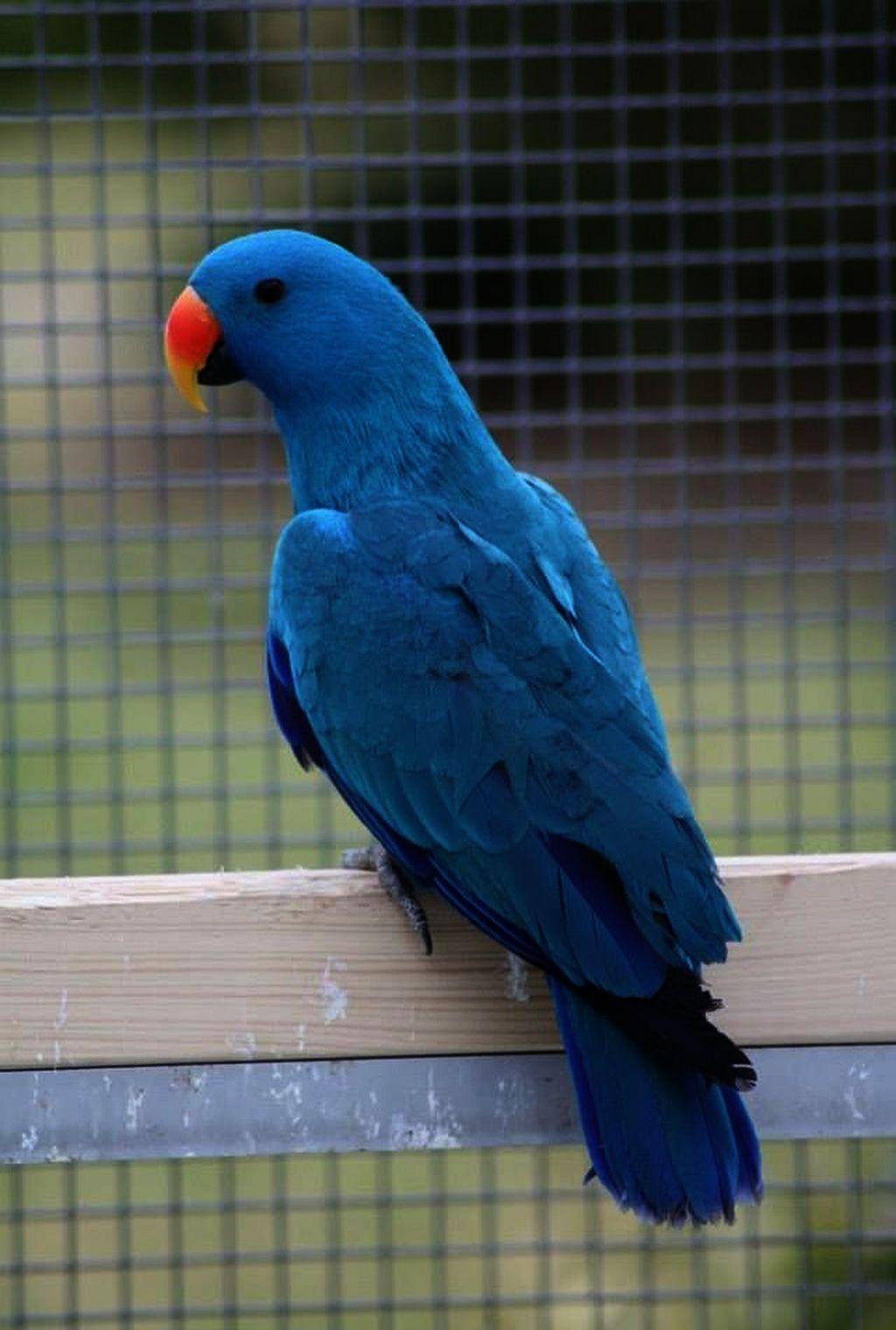 Spectacular Places To Buy Pet Birds Near Me Best Pet Birds