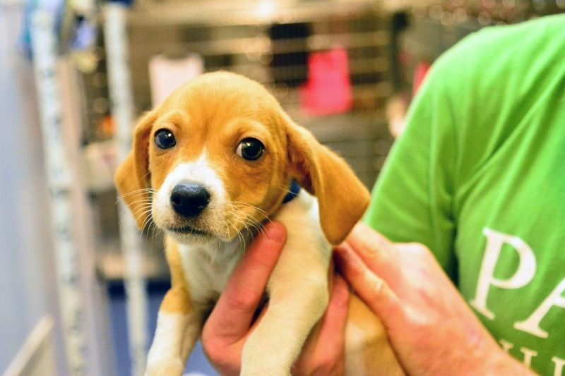 We Need To Tell Them With Images Animal Shelter Animals Shelter