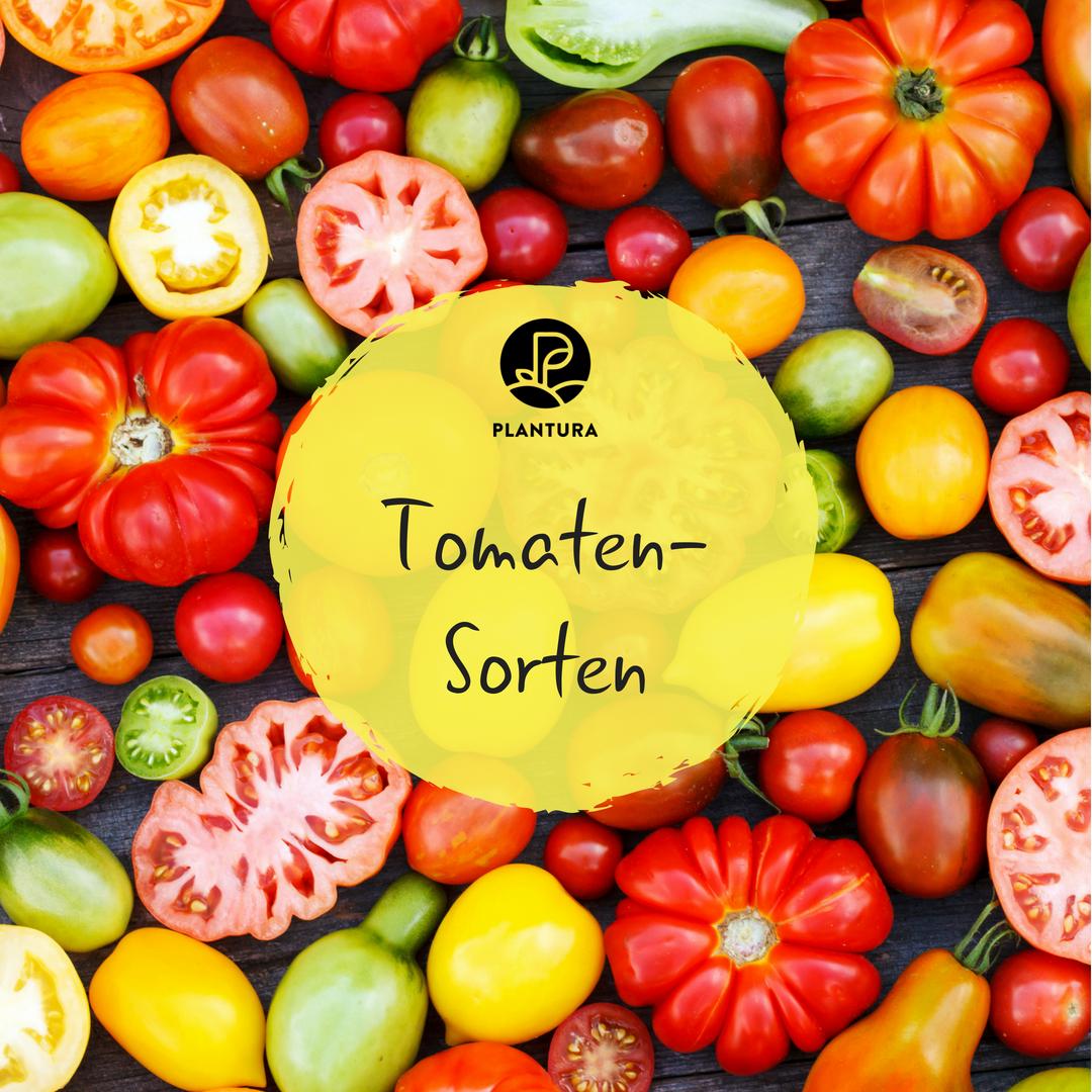 tomatensorten die 60 besten altbew hrten neuen sorten bersicht tomaten sorten tomaten