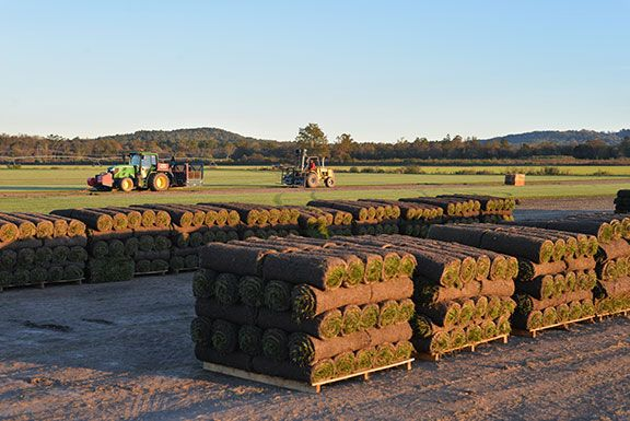 Sod Seed Fertilizer In Hendersonville Pallet Of Sod Sod Sod Grass