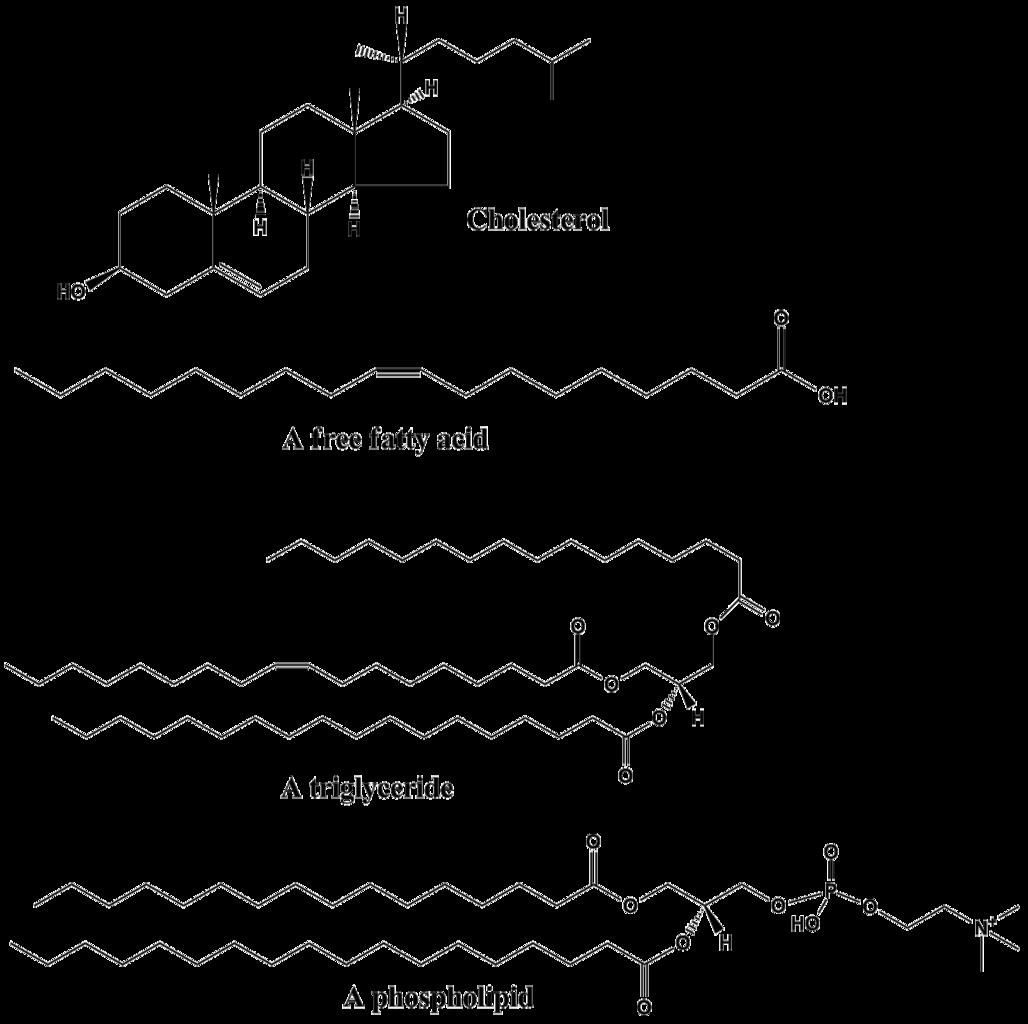 Structure Of Lipids Http://biology.clc.uc.edu/courses