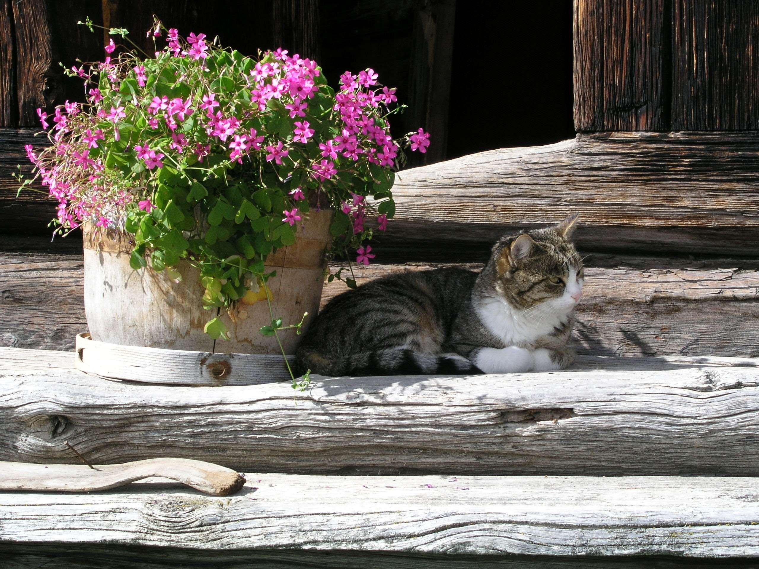 animal cat concerns dormant feline flowers in the