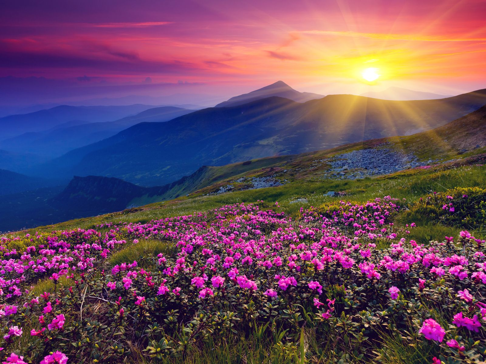 Meadows Green Meadows Wild Purple Flowers Mountains And Sunset Landscape Beautiful Landscapes Landscape Photography Beautiful Nature