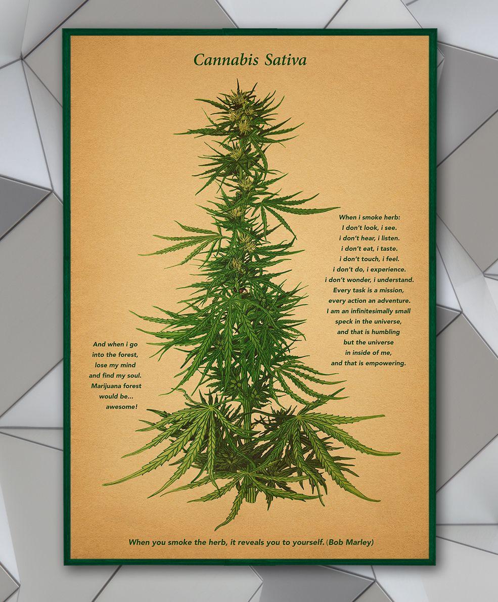 Quotes vintage cannabis sativa print poster marijuana art botanical ...