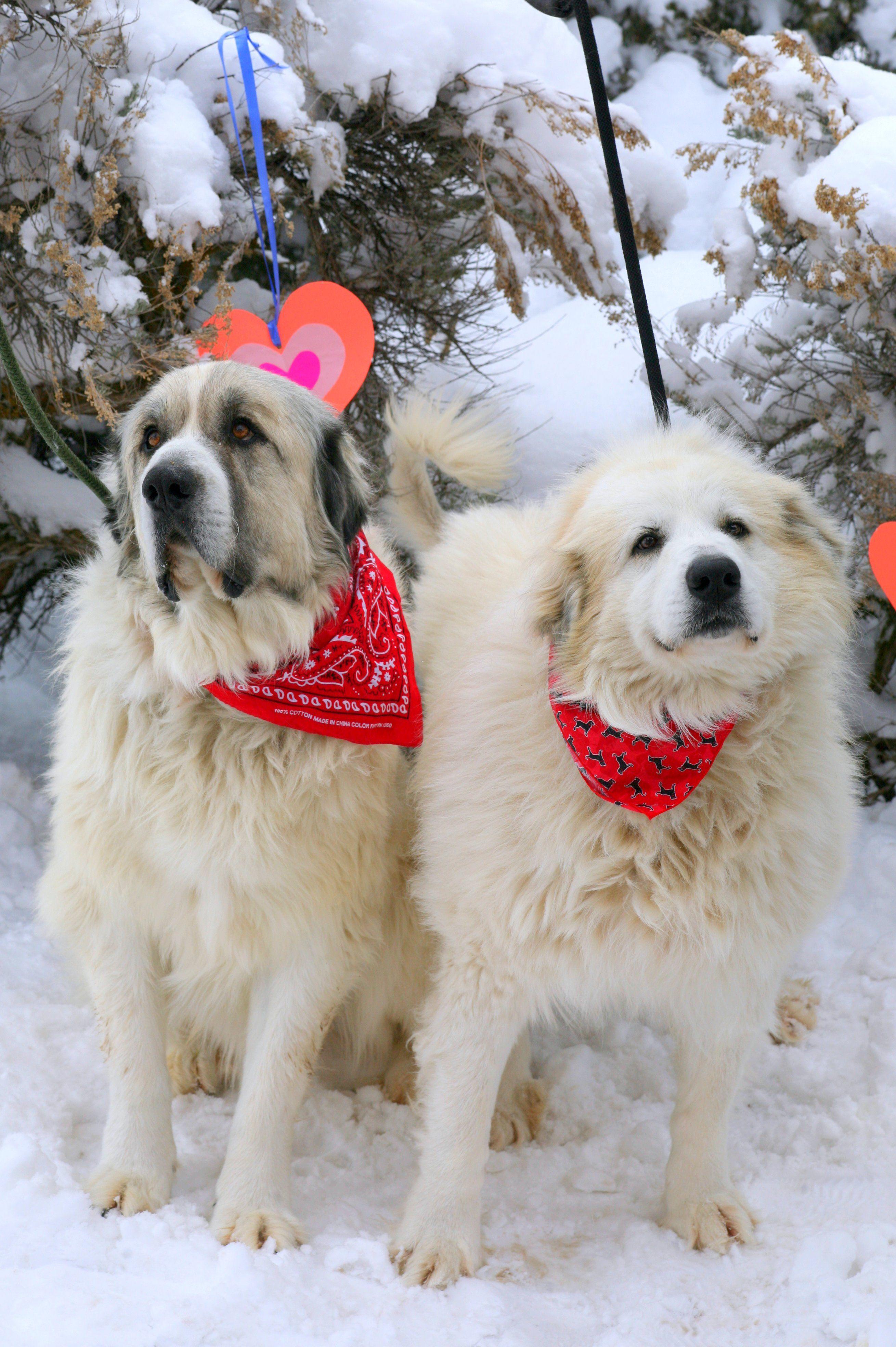 14++ Glenwood springs animal shelter ideas