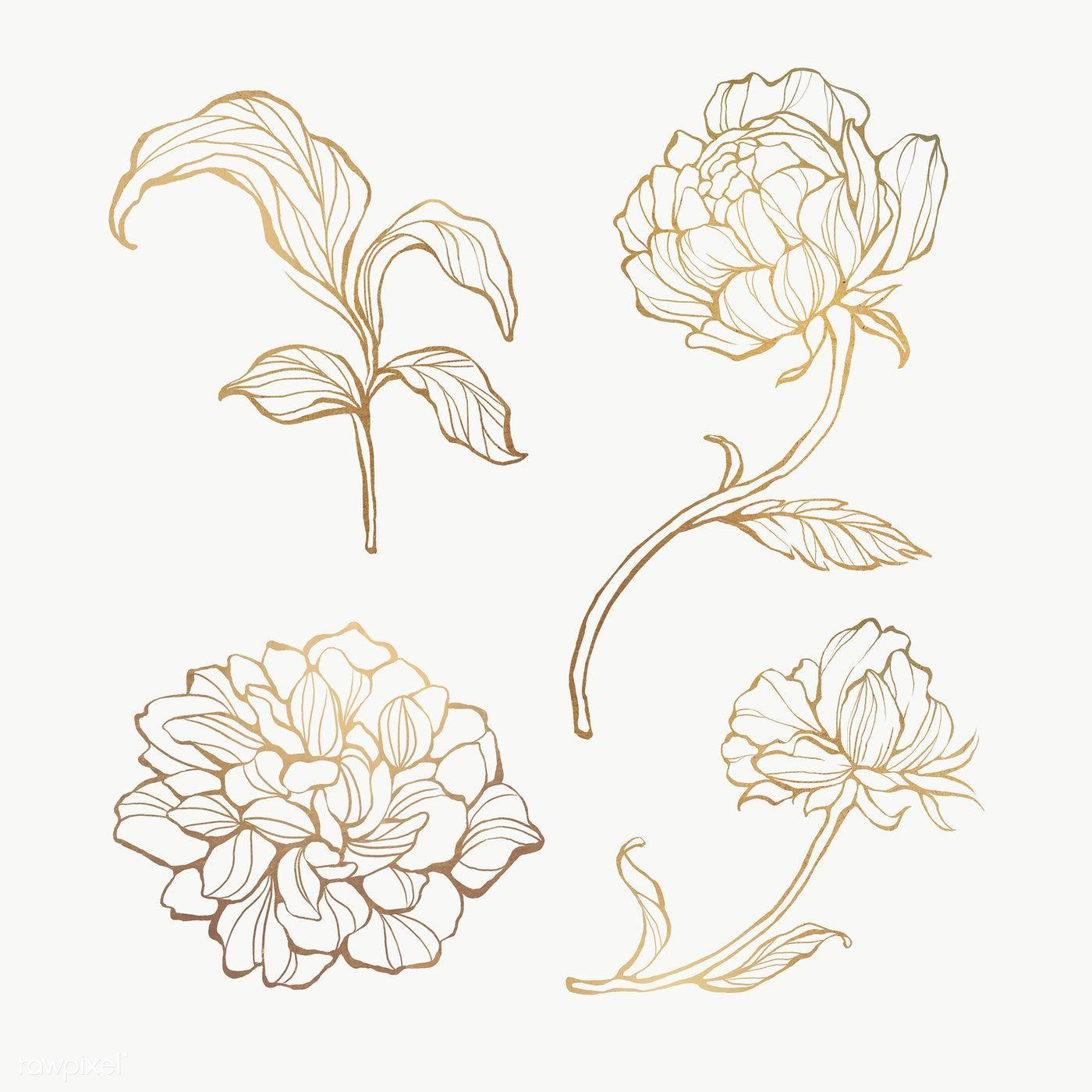 Gold Floral Outline Set Transparent Png Premium Image By Rawpixel Com Nunny Gold Drawing Floral Border Design Flower Outline