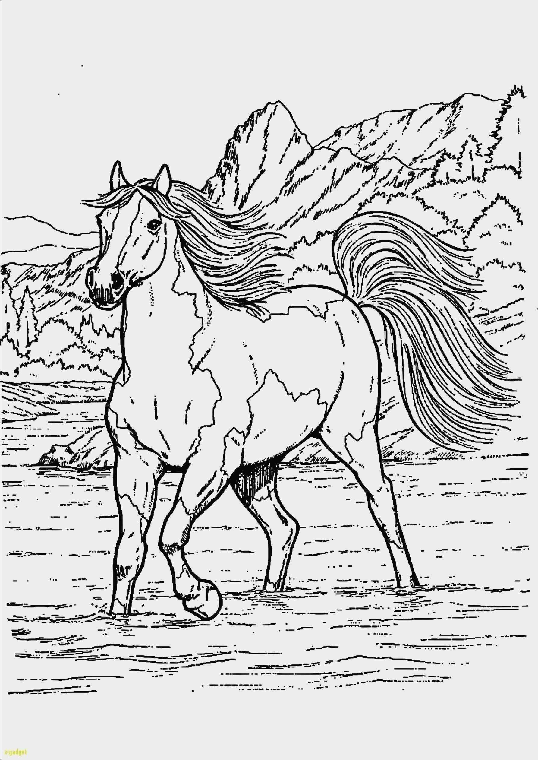 Malvorlagen Pferde Zum Ausdrucken Pdf Aiquruguay