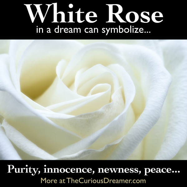 A White Rose As A Dream Symbol Might Represent More At