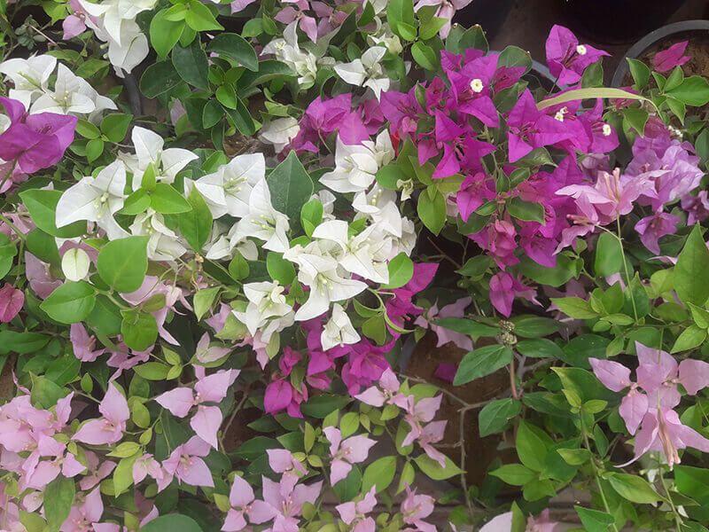 Pin By Tharindu On Polwatta Plant Nursery Plant Nursery Plants Garden Services