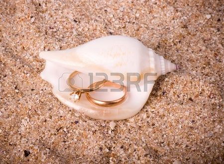 Beautiful exotic shell with golden wedding rings