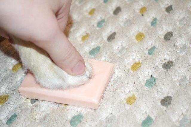 How To Stop The Bleeding If You Trim Your Dog S Toenails Too Short Cuteness Dog Toenails Dog Nail Bleeding Trimming Dog Nails