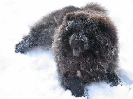 Looks like someone was happy to see snow!