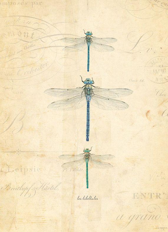 Les libellules illustrations pinterest libellule - Photo de libellule a imprimer ...