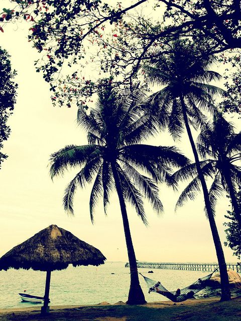 Photo by Mag On Earth, via Flickr   silhouette + beach palm treen hammock + yellow gold brown blue green black + iphoneography