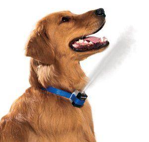 Amazon Com Petsafe Premier Gentlespray Citronella Anti Bark Dog Collar Pet Supplies Anti Bark Collar Bark Collars For Dogs Dog Safety