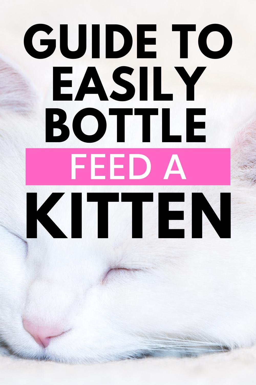 Pin On Kitten Care Kitten Advice