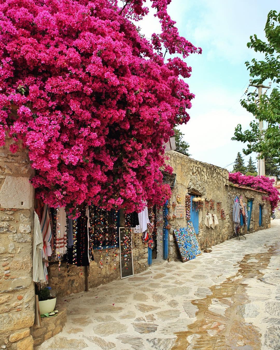 """Datca Mugla Turkey <a href=""""http://musapg.catspray.hop.clickbank.net/""""><img src=""""http://www.catsprayingnomore.com/images/banners/standard/ad3.jpg"""" border=""""0"""" alt=""""Cat Spraying No More"""" /></a>"""