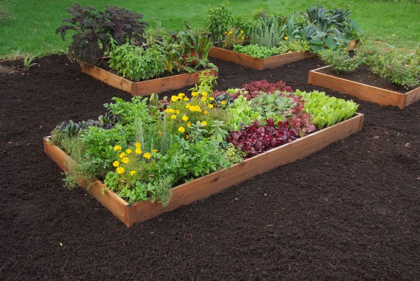 Cedar Raised Beds 2 ft. | Raised Bed Gardening Made in ... on 2 x 8 retaining wall, 2 x 6 raised garden bed, 2 ft raised garden bed, 4 x 8 raised garden bed, 2 x 4 raised garden bed,