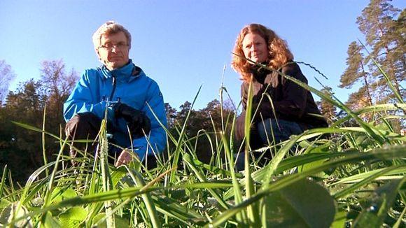Kerääjäkasvit imevät typpeä pelloista.