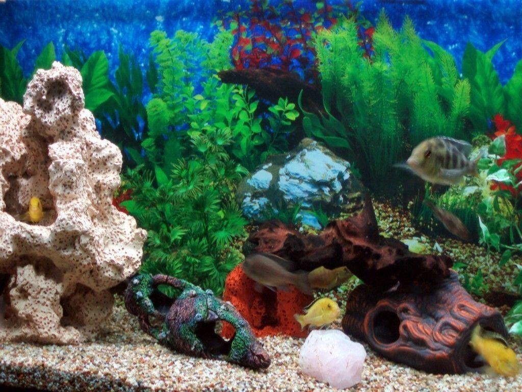 aquarium desktop wallpaper pinterest aquariums and wallpaper