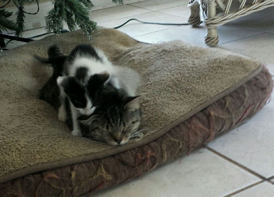 Cat Went Outside To Play And Came Home With A Kitten Cat Rescue