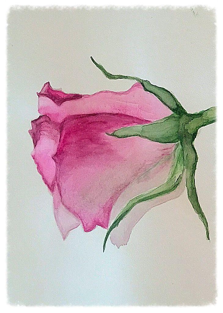 Pin Von Frauke Weber Auf Malerei Aquarell Rose Malen Und Blumen