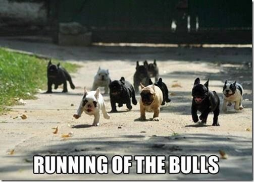 FUNNY . . . THEY DON'T LOOK THAT DANGEROUS TO ME!!
