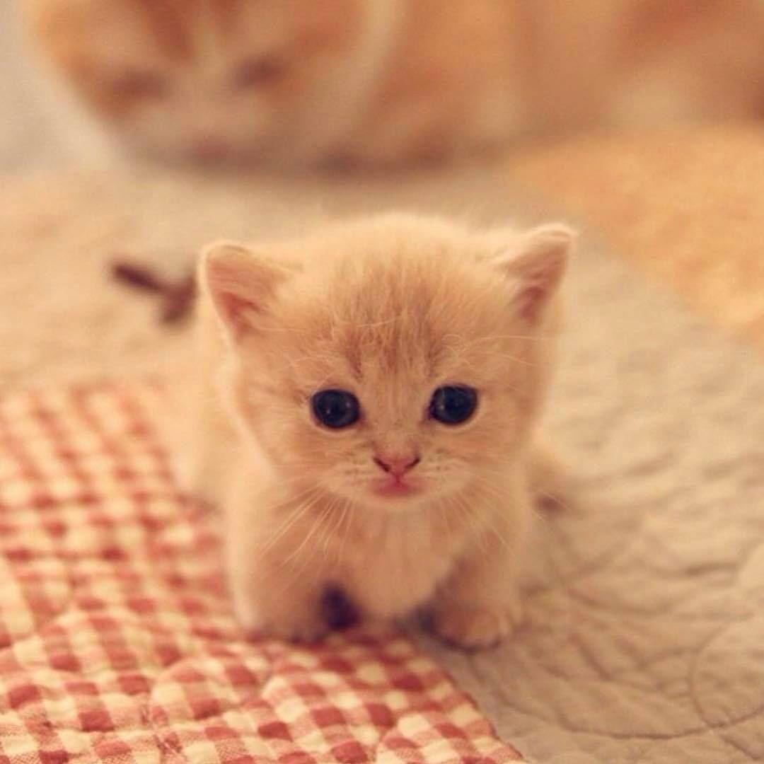 Cutekittensarefun So Smol Catsandkittens Cute Cats Cute Baby Cats Cute Animals