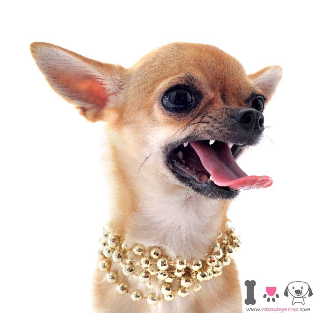 Pin En Animales Y Mascotas