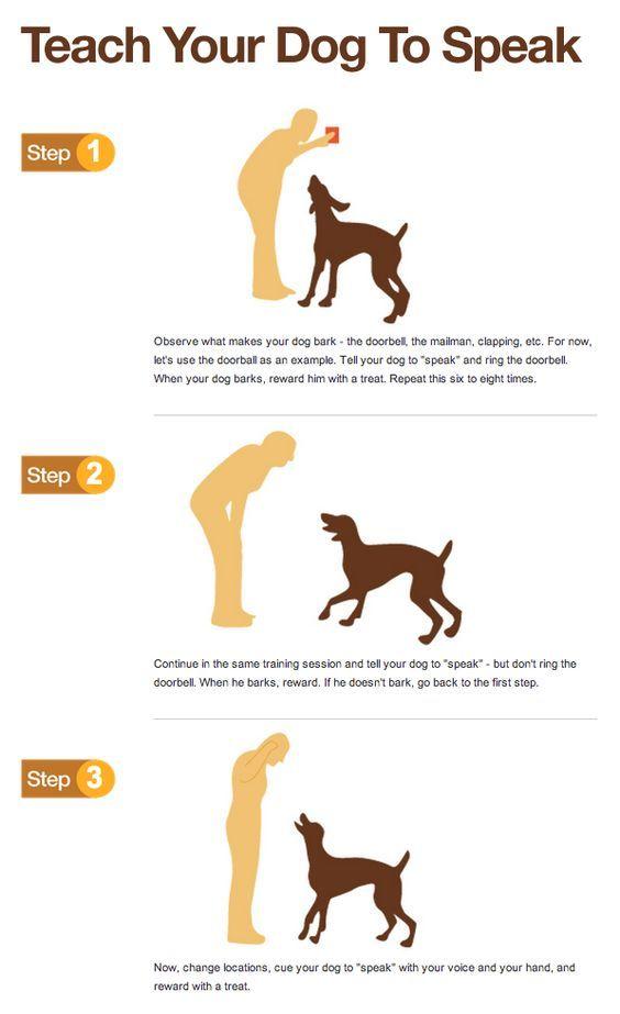 Teach Your Dog To Speak Dog Training Near Me Dog Training