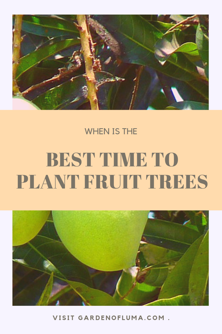 Best Time To Plant Fruit Trees Fruit Trees Plants Planting Fruit Trees