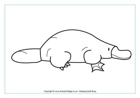 Platypus Colouring Page 2 Prek Australia Platypus Colouring