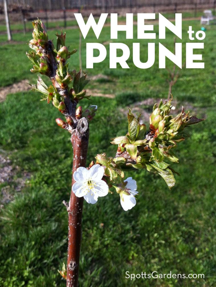 When To Prune Garden Pruning Calendar Spotts Garden Service Pruning Shrubs Garden Services Prune