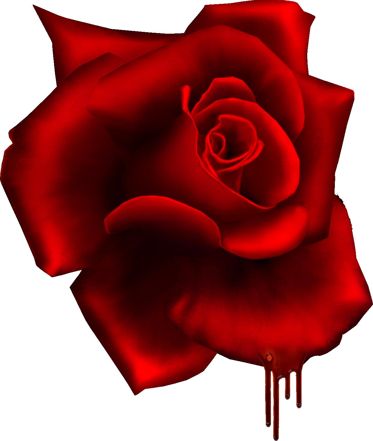 Gothic Red Rose Rosas Suenos