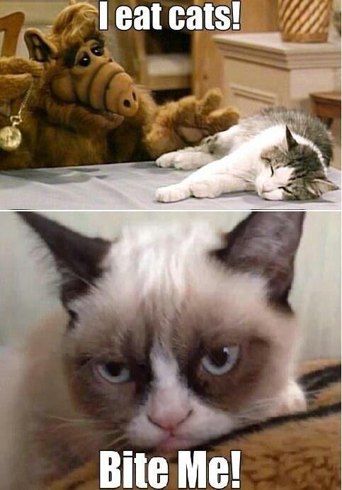 Alf did love cats - I had forgotten! LOL!
