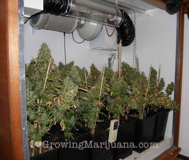 What are the best marijuana grow rooms? You can grow weed in a cupboard cabinet grow tent or full room. The best indoor grow rooms depend on how its build : box for growing weed - Aboutintivar.Com