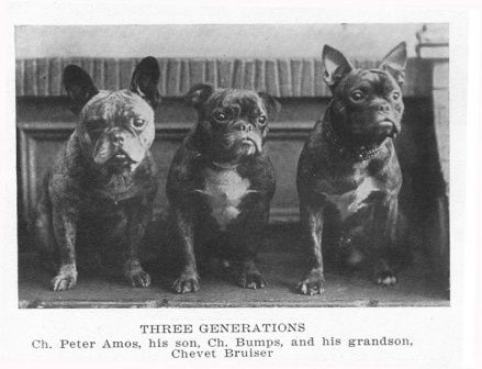Vintage French Bulldogs❤️