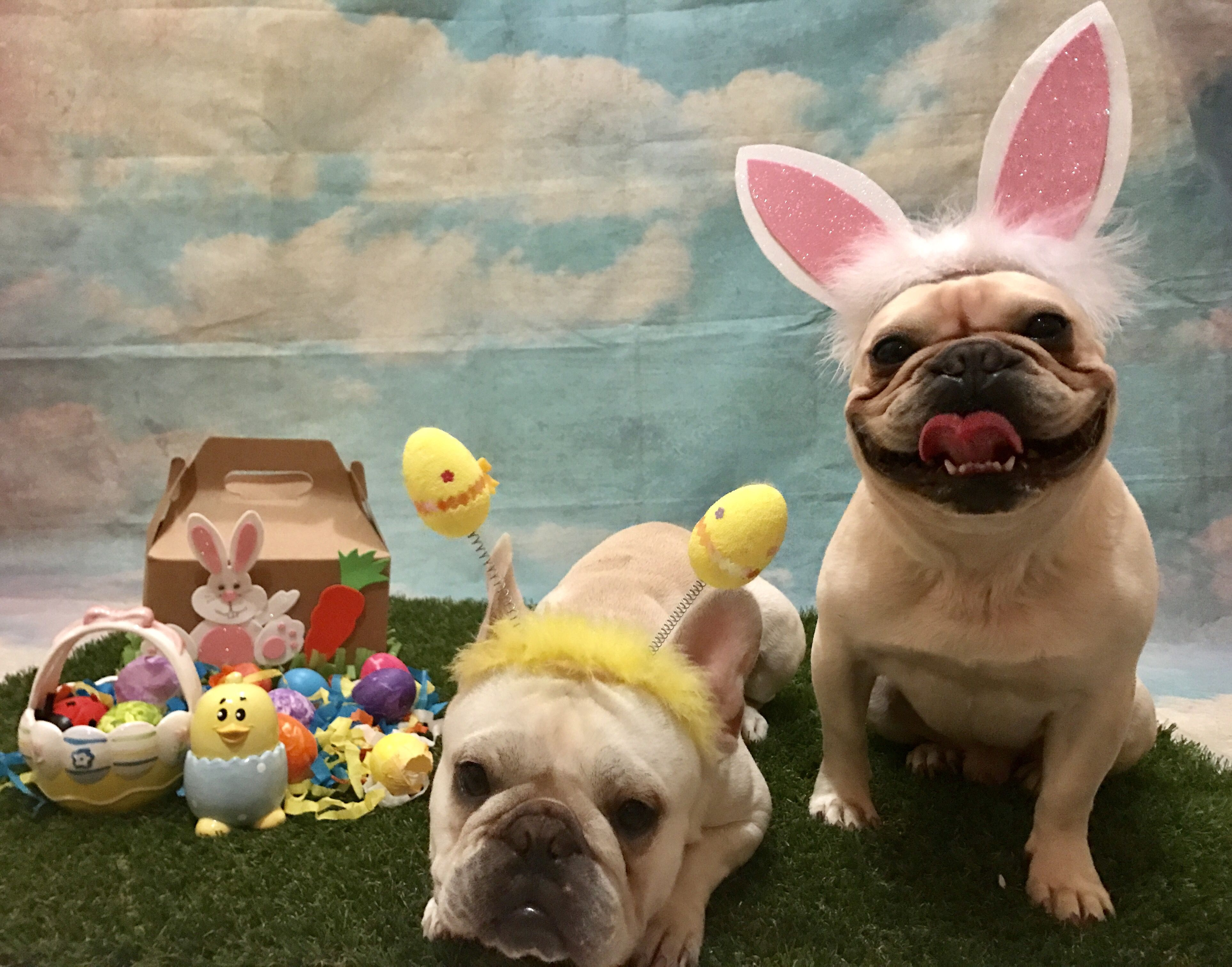 Happy Easter From Julio And Roberto The French Bulldog Easter Bunnies Animals Beautiful Cute Animals French Bulldog