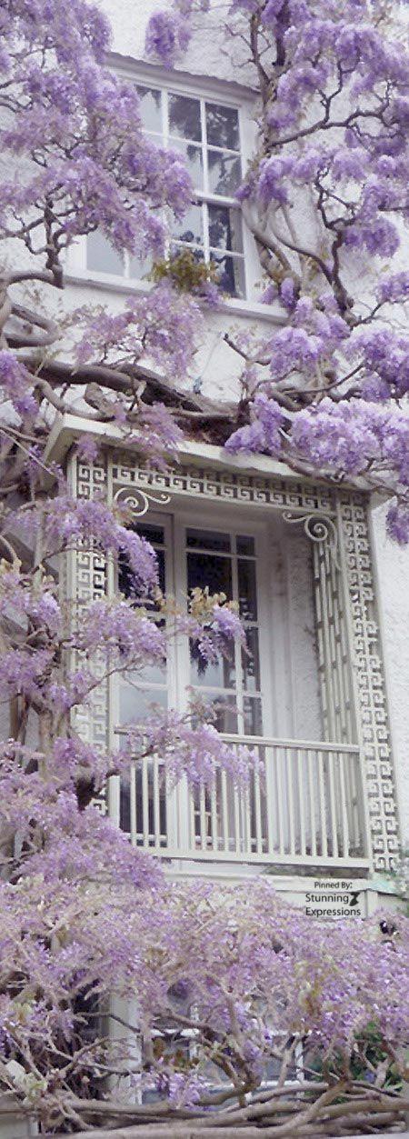 ab4008f76c4 Ana Rosa Purple Flowers Wallpaper