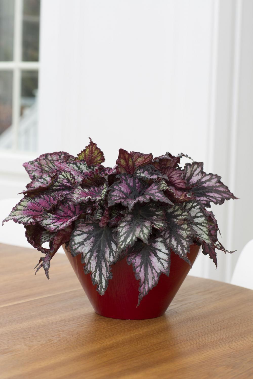 Pflanzen Für Dunkle Ecken 11 zimmerpflanzen für dunkle ecken zimmerpflanzen dunkel und