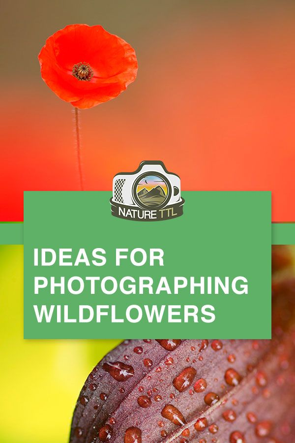 Ideas for Photographing Wildflowers #wildflowers