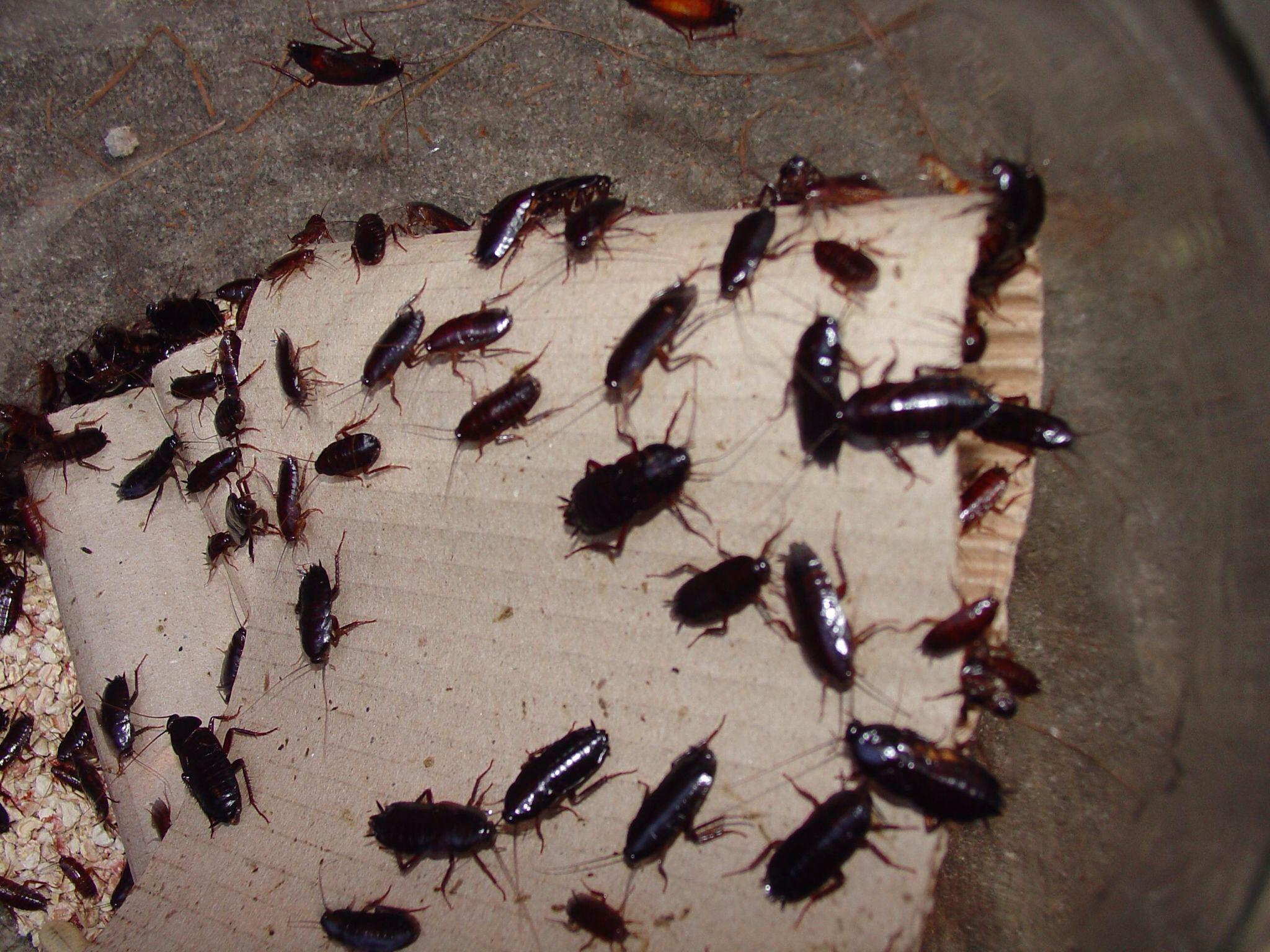 Little Roaches In My Kitchen in 2020 Garden pests