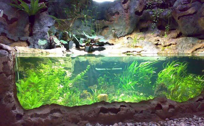 Example of glass front pond aquarium mall of america for Koi pond tank