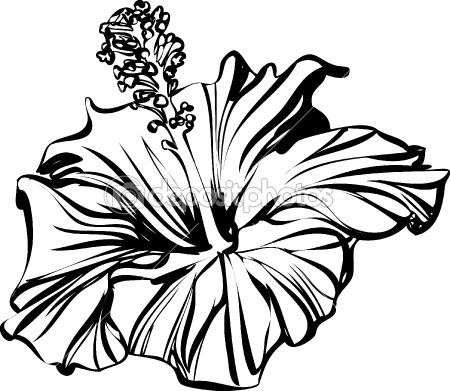 Hibiscus Outline Rose Line Art Hibiscus Drawing