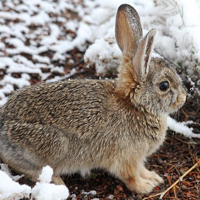 There S A Snow Bunny Outside My Studio Window Hay Un Conejito