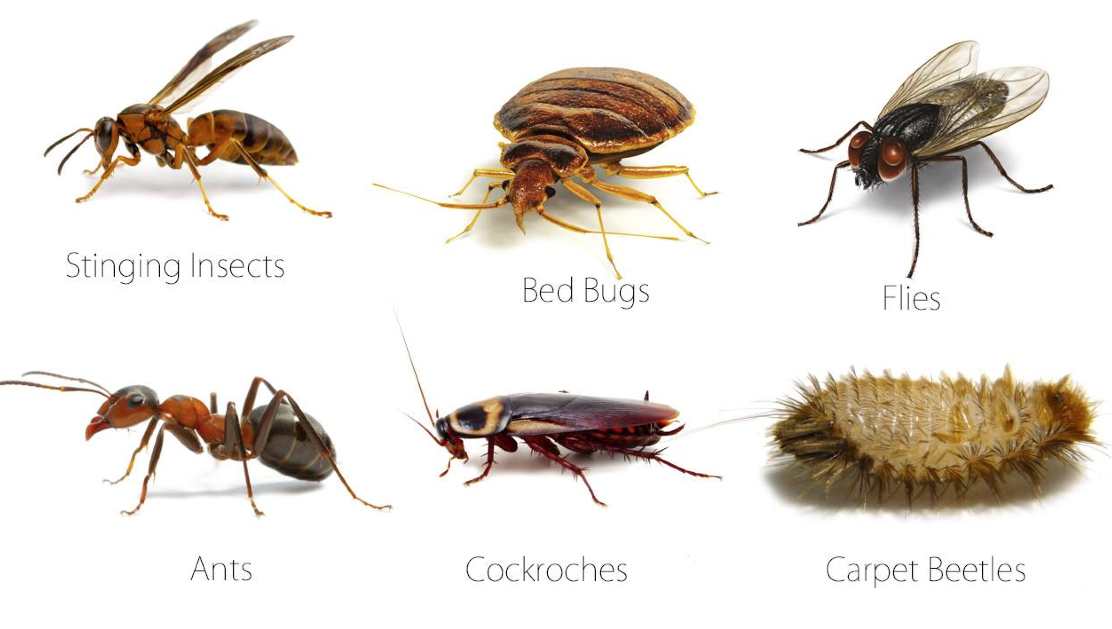 Here are some pests to avoid at home and in a business